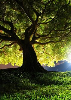42 Best Trees images in 2019 | Forests, Beautiful places
