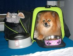 Pepper's Paws: Petmate See & Extend Carrier, Plus More New 2013 Petmate Travel Products - Pet Product Review