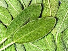 Planta care ține bătrânețea la distanță   Articole   Click sanatate