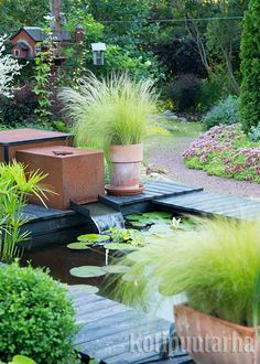 Pond, Patio, Outdoor Decor, Plants, Home Decor, Water Pond, Decoration Home, Room Decor, Plant