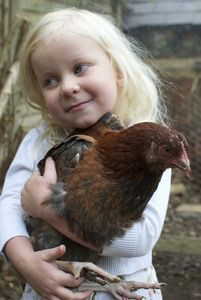 A content little girl and her chicken friend. Animals deserve as many hugs as possible.  ----------------------------------------------  Chickens become firm family favourite in time for National Pet Month