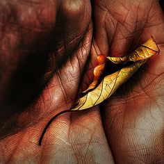 Dried up leaf in hand, via Flickr.