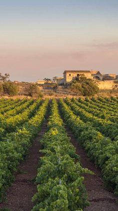 Sicily vinejards enjoy the heritage of wine with Nero d' Avola Insolia Grillo Cataratto Malvasia Passito