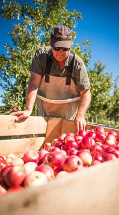 In the Orchards Red Blush, Blush Color, Orchards, Eating Well, Healthy Choices, First Time, Healthy Eating, Apple, Fresh