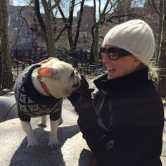 French Bulldog, Winter in Central Park, via Batpig & Me Tumble It