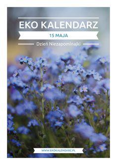 Dzień Niezapominajki – pakiet edukacyjny Forget Me Not, May, Garden, Flowers, Plants, Garten, Lawn And Garden, Gardens, Plant