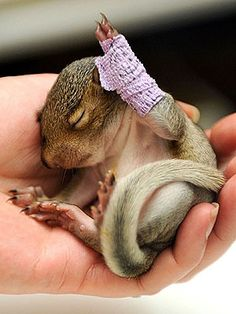 Baby squirrel cast....the Vet who fixed him is filled with awesomeness!