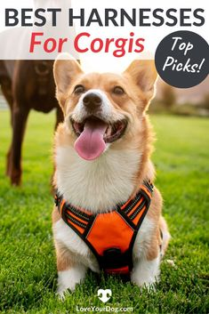 Looking for the perfect harness for your corgi? Check out our 7 favorite picks, as well as detailed information about each brand. Training Your Puppy, Dog Training Tips, Puppies Tips, Dogs And Puppies, Super Cute Dogs, Cute Corgi, Corgi Dog, Dog Training Techniques, Dog Behavior