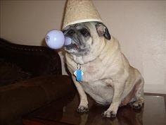 Chinese Pug Lamp