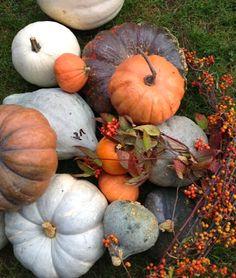 Karin Lidbeck Autumn Garden, Autumn Home, Pumpkin Garden, White Pumpkins, Fall Pumpkins, Pumpkin Leaves, Autumn Leaves, Pumpkin Centerpieces, New England Homes