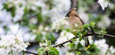 Photos, Bird, Animals, Animales, Pictures, Animaux, Birds, Animal, Birdwatching