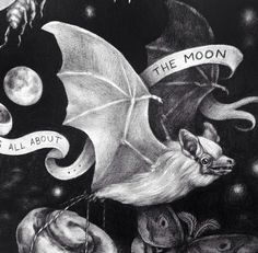 All About the Moon Bat