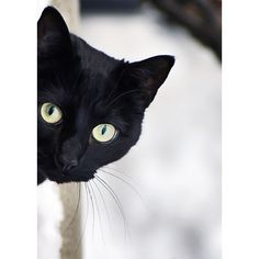сумка кошка: 432 тыс изображений найдено в Яндекс.Картинках ❤ liked on Polyvore featuring animals, cats, backgrounds, pets, pictures and filler