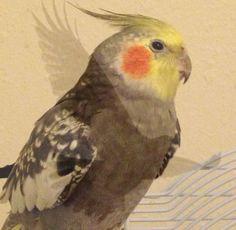 Everybody has an inner self, even birds.