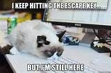 Image detail for -grumpy cat / funny pictures & best jokes: comics, images, video, humor ...