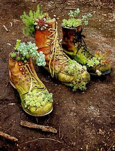 Succulents look right at home in old work boots, eh?!