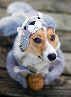 Squirrel Dog