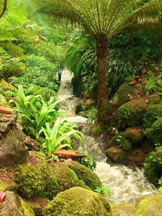 Gardens at Monserrate - Sintra Sintra Portugal, Visit Portugal, Rent A Villa, Garden Waterfall, Lisbon, Landscape Architecture, Wonderful Places, Beautiful World, Golf Courses