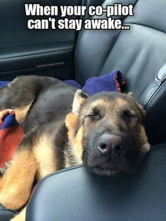 GSD...Look at that face!