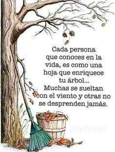 Cada persona que conoces en la vida es como una hoja que enriquece tu árbol… Muchas se sueltan con el viento y otras no se desprenden jamás.