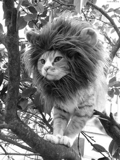 King of the Jungle~ ♛