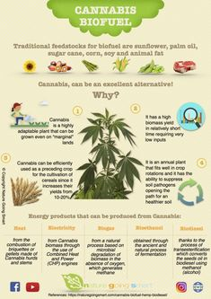 Practical infographic on the uses of cannabis/hemp for biofuel production. Don't miss the chance the spread the word about this plant. Marijuana Facts, Energy Resources, Cannabis Plant, Farm Gardens, Alternative Energy, Renewable Energy, Sustainable Living, Revolutionaries, Hemp