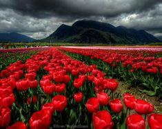 Agassiz, Beautiful British Columbia, Canada