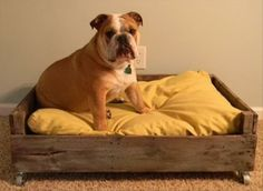 Doggy Pallet Bed This is soooo cute! If only I had a dog who actually used a dog bed & one who didn't think he was human. Pallet Dog Beds, Diy Pallet Bed, Pallet Crafts, Pallet Projects, Diy Projects, Pallet Building, Building Ideas, Palette Diy, Diy Dog Bed