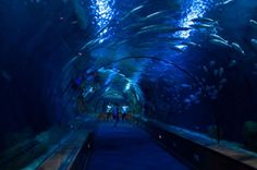 Aquariums can be hubs for research and conservation projects, spearheading the movements to save our oceans. Here's a tribute to the most beautiful. Amazing Aquariums, Save Our Oceans, Exotic Fish, Fish Tank, Conservation, Most Beautiful, World, Impressionism, Fishbowl
