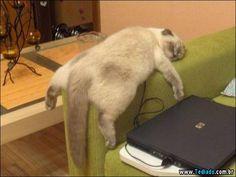 Selo dorminhoco do Tediado - Gatos (20 fotos)