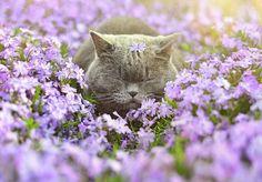Animais cheirando flores (18)