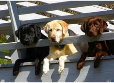 Love Dogs? Then Join Our Facebook Group  Click Here To Join  >> https://www.facebook.com/groups/Dogs4Eva/
