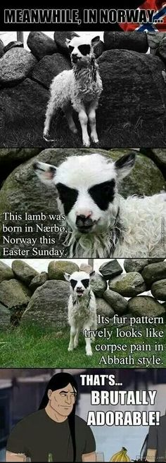 "Goat from Norway with black metal ""Abbath style corpse paint"" fur around the eyes. Brutally Adorable."