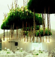 Amazing creations for table centres, floral & fauna displays suspended from ceiling, stunning!