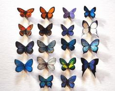 Butterfly Magnets Set of 18 exotic butterflies, Insects, Refrigerator Magnets, Handmade by dougwalpusartstudio. Explore more products on http://dougwalpusartstudio.etsy.com