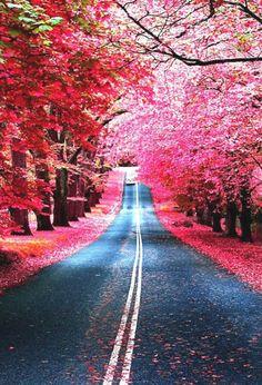 enchanted highway