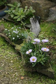 Using a log as a planter in the garden (;