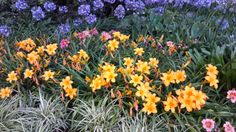 Felicity Writing Away: Verdant Green Living In England, Writing, Garden, Plants, Garten, Gardening, Plant, Composition, Outdoor