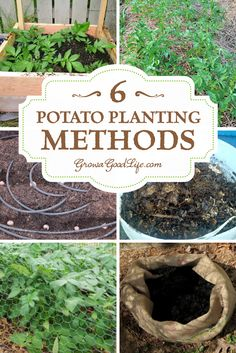 6 Potato Planting Methods for the Backyard Garden | Grow a Good Life | Different methods work for different growing locations. If you are planting potatoes for the first time or if you have planted them in the past and failed to harvest a good yield, I urge you to not give up and try a different approach until you find a method that works for you. Here are six different potato planting methods for you to experiment with.