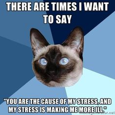 Chronic Illness Cat | The problem is those that caused the stress don't see that they have and think it is just part of the illness. Very patronising.  Not worth the stress trying to make the understand, they never will.