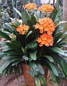 Gardening Caring for Clivia species properly Teak Patio Furniture - Why is it the best choice? Herbs Indoors, Plant Needs, Backyard Decor, Beautiful Gardens, House Plants Indoor, Diy Garden Decor, Amazing Gardens, Plant Decor Indoor, Garden Tool Storage