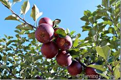 Individual Rustic Apple Tart | Running in a Skirt