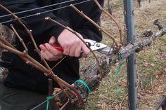 time for. Growing Plants, Fruit Trees, Grape Vines, Outdoor Power Equipment, Spring, Gardening, Handmade, Travel, Plant