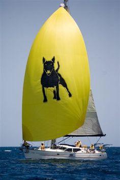 Bull Terrier Sail #Bully #Bull #Terrier #Creative #Art #Dog #Dogs #Sport