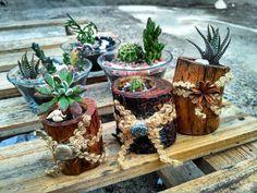 """32 Me gusta, 5 comentarios - claudio (@succatus_store) en Instagram: """"#cactus #cactuslover #suculenta #succulents #succulover #instamoment #chilegram #f4f #laserena…"""""""