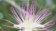 kwiaty tropikalne | ce que le judaisme enseigne sur le corps et la respiration. Site Modia