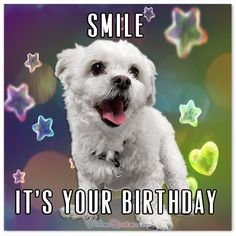 Browse our wonderful collection with unique birthday wishes messages! Make someone smile with a spectacular way of saying Happy Birthday! Unique Birthday Wishes, Birthday Wishes Messages, First Birthday Banners, Birthday Blessings, Birthday Posts, Birthday Wishes Funny, Blessed Birthday Wishes, Funny Happy Birthday Images, Happy Birthday Meme