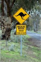 BADGAR WILDLIFE RESCUE>> Grampians & District