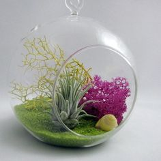 Air Plant Terrariums 03 Great Ideas