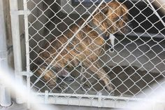 Dog hit by car and in pain left to languish in California high kill shelter-slide0